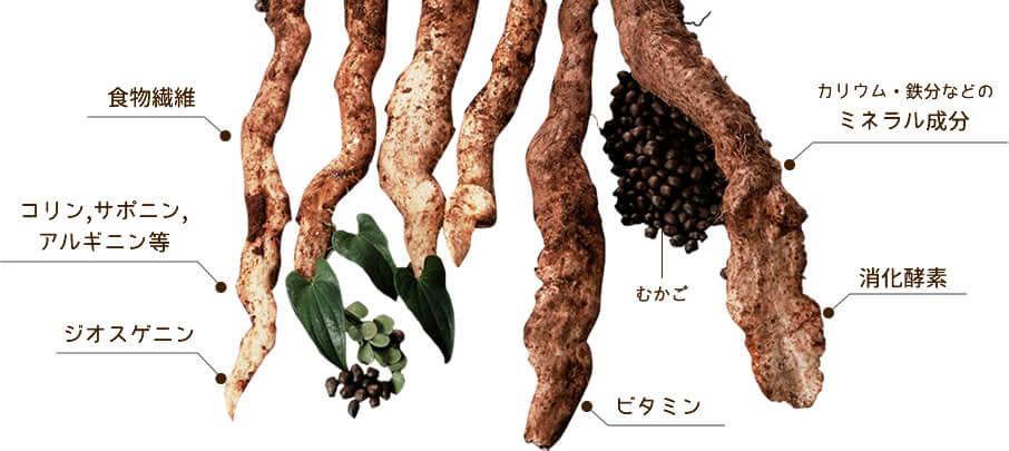 自然薯の栄養価