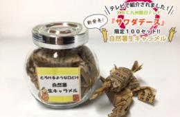 KBC九州朝日テレビ「サワダデース」で紹介!自然薯生キャラメル!