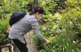 園芸と自然薯とろろ